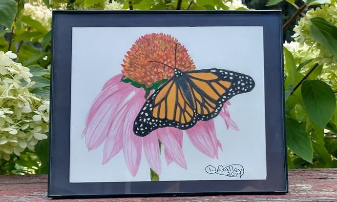 Butterfly BB R