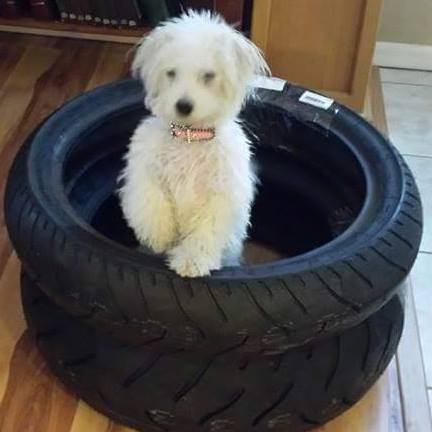 Lucy in tires